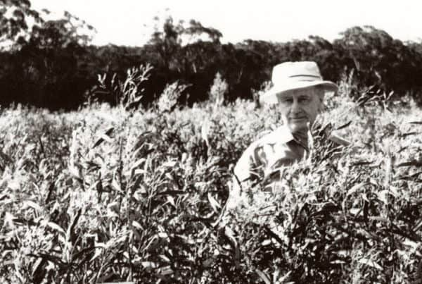 Historic image GR Davis Eucalyptus oil producer