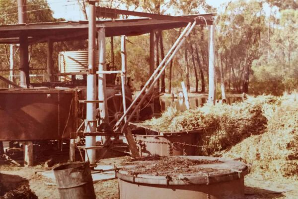 Historic image GR Davis Eucalyptus oil producer